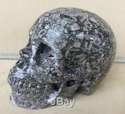 Crinoid Stone Skull Carving 5 1/2