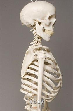 Harvey Life-Size Human Halloween Skeleton, Haunt Skeletons NEW